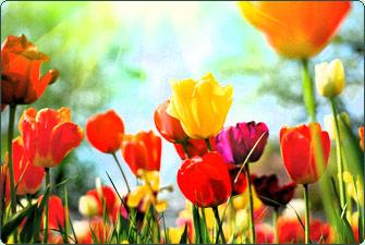 spring_fling-main